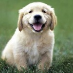 Important Rules in Training Your Puppy