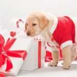 How to treat your dog this Christmas