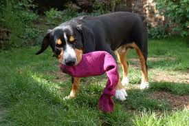 diy-dog-sock-toys