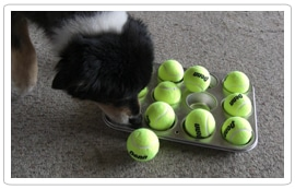 muffin-tin-game-for-dogs