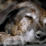Looking after your older dog