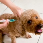 I don't vaccinate my dogs at all – the High Risk Option?