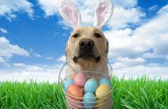 images Doggy Easter egg hunt