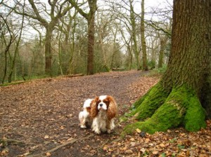 north-london-dog-walks-highgate