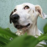 Dogs and Plants: Toxic and Non-Toxic