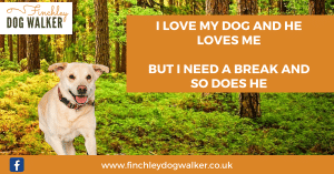 Finchley dog walker holiday