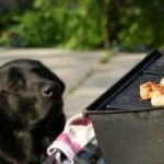 BBQ dangers for dogs