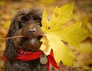 dog-autumn_0