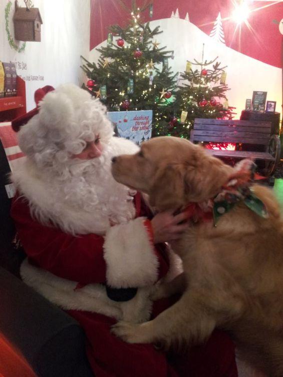 Santa Paws  Dog Breed