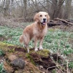 Top Tips on Dog Walking in the Spring