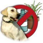 Dog Poison