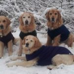 The Essential List of Winter Dog Walk Must-haves