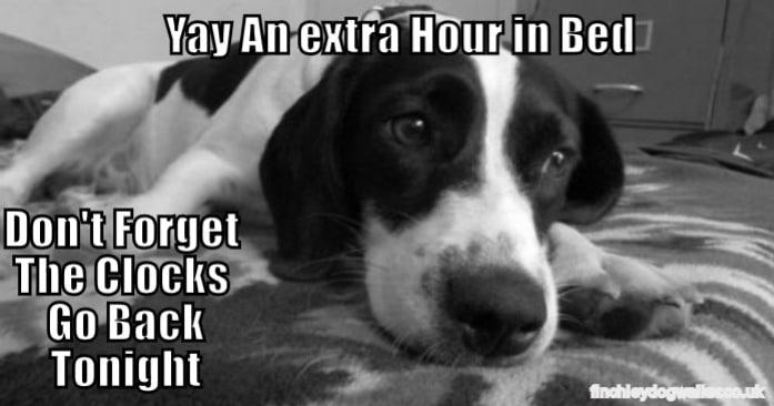 Don T Forget The Clocks Go Back North London Dog Walker
