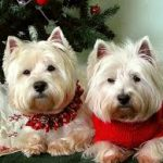 The Importance of Maintaining Your Dog's Routine at Christmas