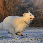 Winter Advice for Caring For Your Pets
