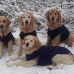 Caring For Your Dog in Winter