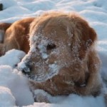 Winter Skincare Tips for your Dog