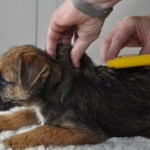 Is your dog micro-chipped?