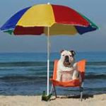 Keep your dog safe in the sun