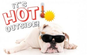 summer-heat-pet-safety-tips