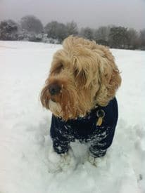 snow-fred Walks with your dog in Wintry Weather