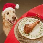 Dogs and Christmas Leftovers