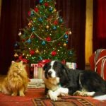 Protect your dog from these Christmas hazards and dangers