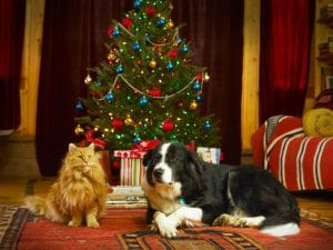 christmas-tree-with-cat-or-dog-300x225-1 12 Days of Doggy Christmas