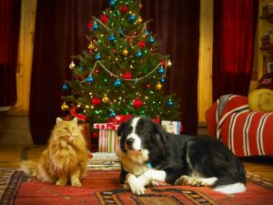 christmas-tree-with-cat-or-dog