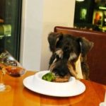 Dog Friendly Christmas Dinners