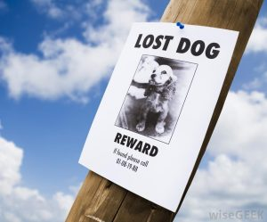 lost-dog-flyer-on-pole