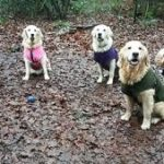 New Year resolutions for dog owners