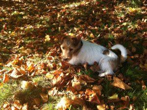 autumn-dog-walk-300x224 Enjoying my favourite season – Autumn