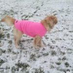 Cold weather tips to care for your dog