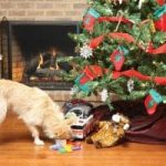 12 Days of Doggy Christmas