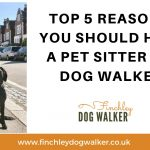 5 reasons you may need a professional pet sitter