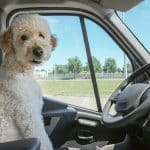 Top Dog Travel Tips in the UK