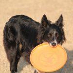 Ideas to Mentally Entertain Your Dog