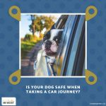 Tips to Keep Your Dog Safe When Taking a Car Journey