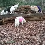 Some tips to entertain your dog whilst on outdoor walks