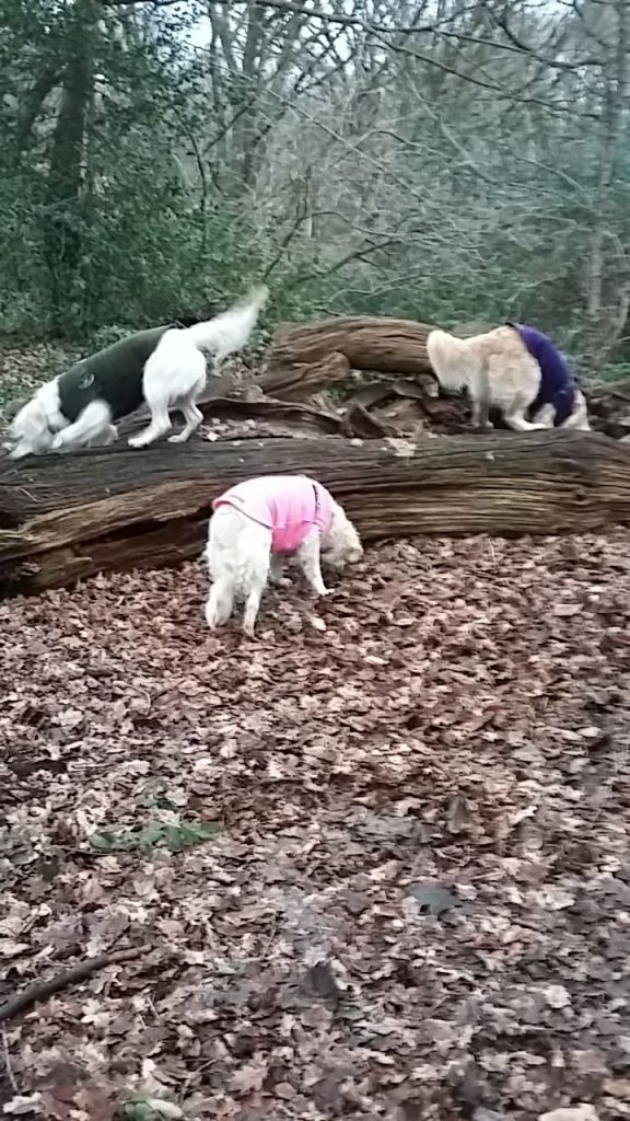 sausage-treat-tree-finchley-dog-walker-576x1024 Some tips to entertain your dog whilst on outdoor walks