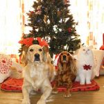 The Dangers of Shop Bought Christmas Stockings for Dogs