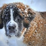 Tips for Winter Dog Care